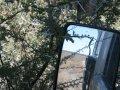 Dornenbüsche in der Central Kalahari Game Reserve