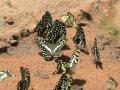 Schmetterlinge im Mago Nationalpark