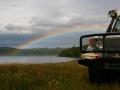 Guanaco mit Regenbogen