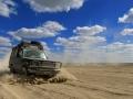 staubiges Guanaco in Kasachstan