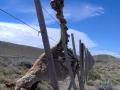 Guanaco hängt im Zaun