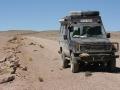 Guanaco in der Wüste