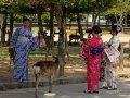 japanische Touristen mit Hirsch