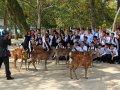 japanische Schulklasse mit Hirsch in Nara