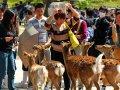 Hirsche und Touristen in Nara
