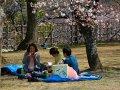 Picknick im Burggarten von Himeji