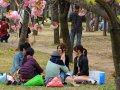 im Osaka Burggarten