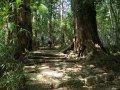 Aufstieg zum Kumano Nachi-Taisha Schrein