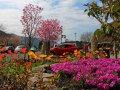 Blumen (Japan)