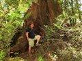 Gunter und der Baum im Kaimanawa Forest Park (Neuseeland)