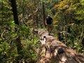 Kaimanawa Forest Park (Neuseeland)