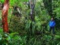 Wandern am Mount Taranaki (Neuseeland)
