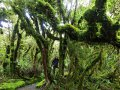 Wandern am Taranaki (Neuseeland)