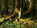 Wald an der Saddler Road (Neuseeland)