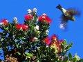 Busch mit roten Blüten (Neuseeland)
