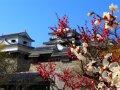 Matsuyama Castle (Japan)