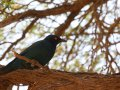 Vogel im Kgalagadi-Transfrontier-Nationalpark