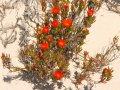 Blumen an der Ostküste Südafrikas