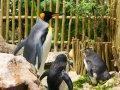 Pinguin im Aquarium in Kapstadt