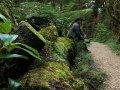 Wald bei Karamea im Kahurangi Nationalpark