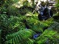 Farne am Milford Sound (Neuseeland)