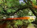Wald bei Karamea (Neuseeland)