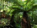 Farne (Neuseeland)