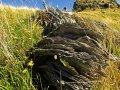 Banks Halbinsel bei Christchurch (Neuseeland)