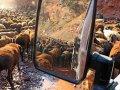 Schafherde auf dem Pamir Highway
