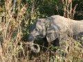 junger Elefant im South Luangwa Nationalpark (Sambia)