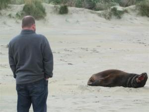 Gunter mit den Seelöwen (Neuseeland)