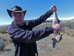 toter Hoppelhase (Neuseeland)