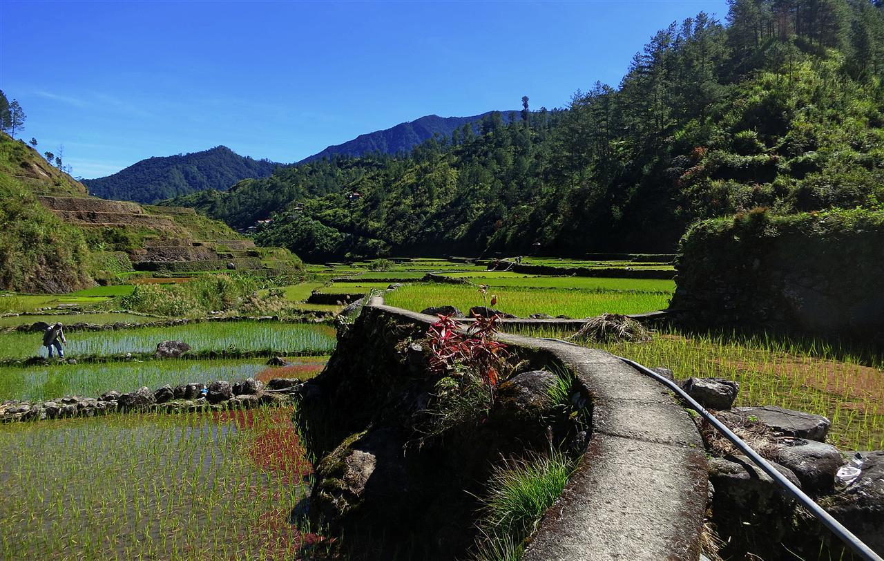 Reisfelder in Barlig (Philippinen)