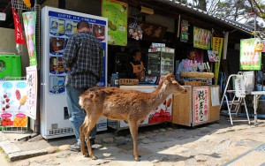 Gunter mit Hirsch in Nara (Japan)
