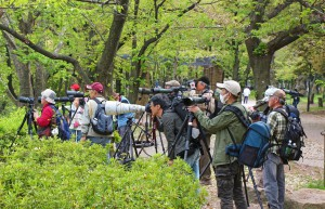 japanische Fotografen (Japan)