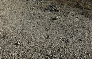 Wolfspuren (Russland)