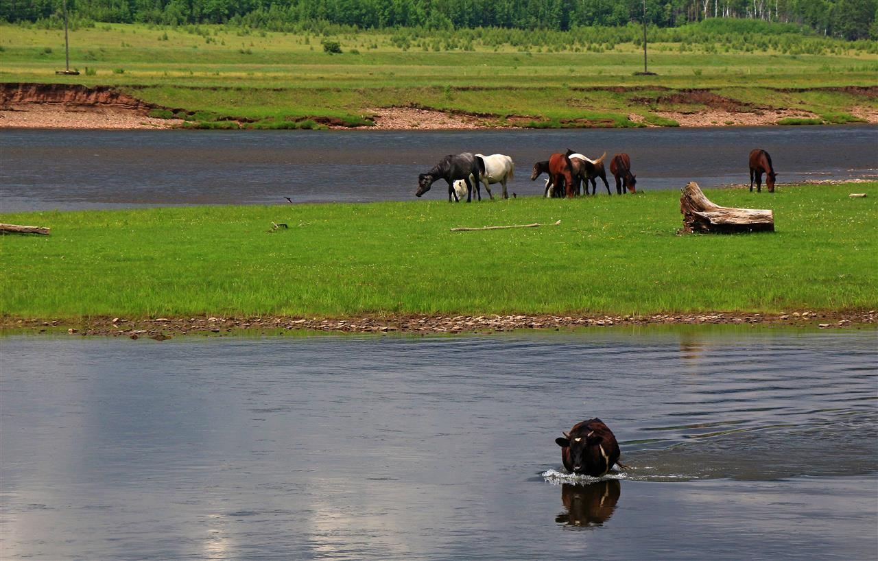 Pferde an der Lena (Russland)