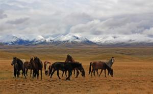 Pferde vor dem Tian Shan Gebirge (Kirgistan)