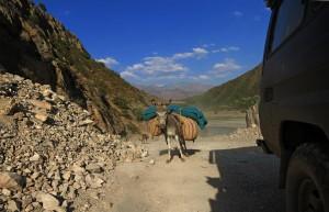 beladener Esel (Tadschikistan)