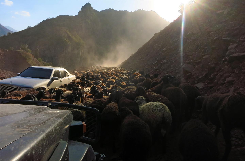 Schafherde auf der Strasse (Tadschikistan)