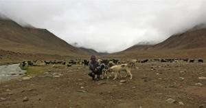 Ziegenhirte (Tadschikistan)