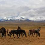 Pferde-im-Tian-Shan-Gebirge-in-Kirgistan